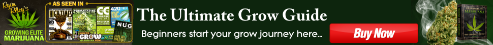 How To Grow Weed 420 – Version 1